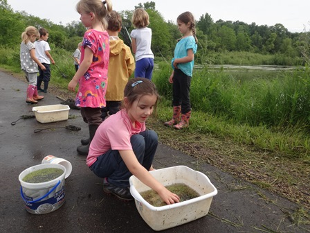 Children investigating aquatic life