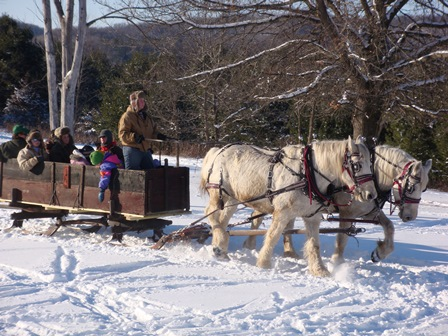 Horse Drawn Bobsled Ride on the Winter landscape